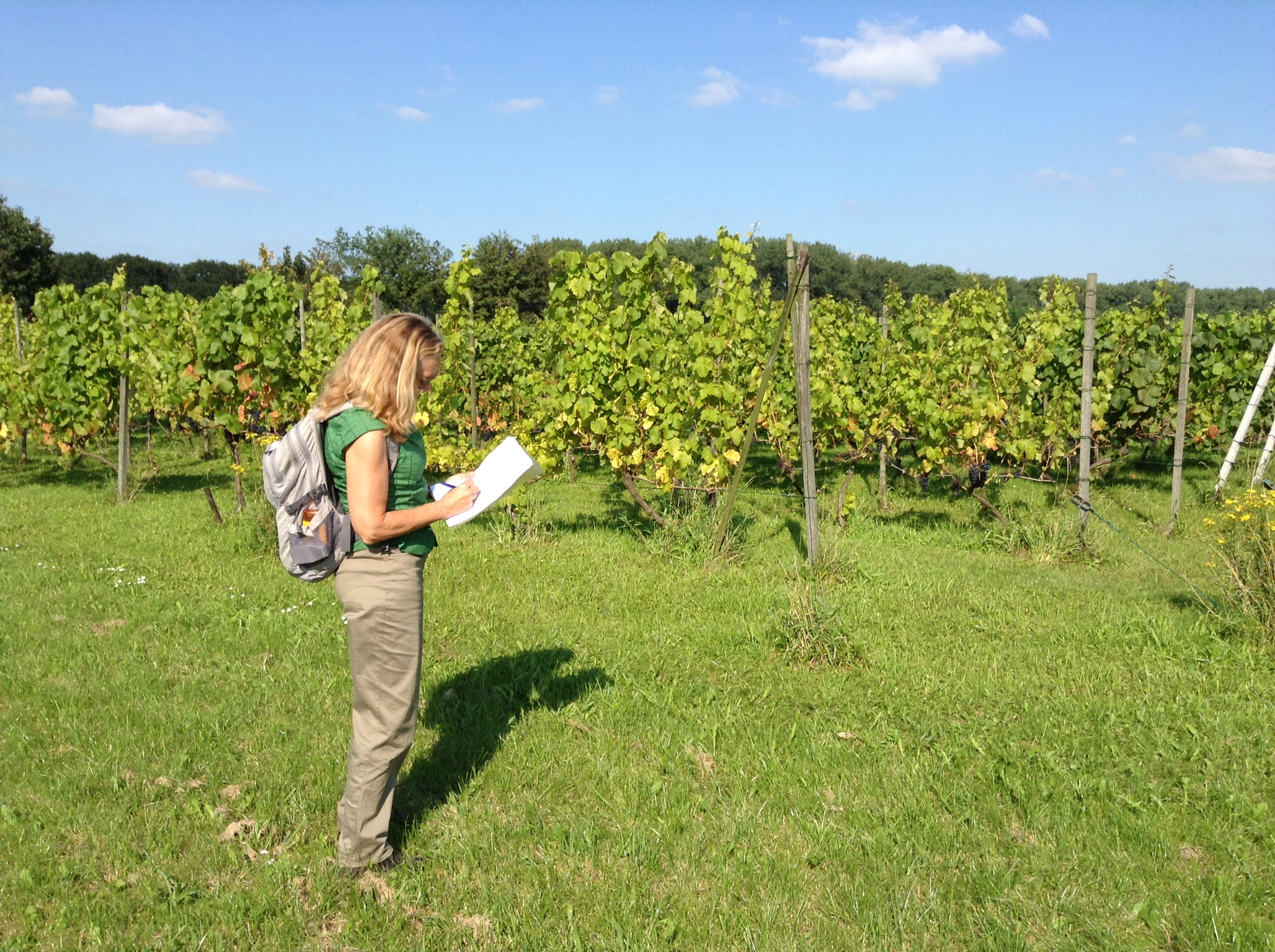 Wijngaard bezoeken Twente