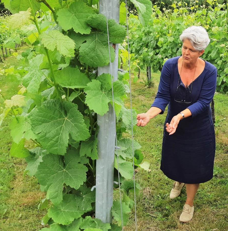 Jantiene Broersma vertelt vol passie over haar wijngaard